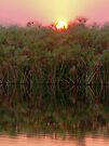 Sunset over the papyrus, Okavango Delta, Botswana by Margaret  Hyde