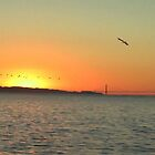 Golden Gate Pelican Sunset by David Denny