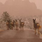 Deer strolling in Garden of the Gods ... Colorado Springs by dfrahm