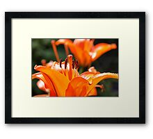 Burst of beauty Framed Print