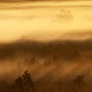 27.8.2013: Mist Over the Woods by Petri Volanen