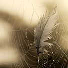 27.7.2013: Feather and Cobweb by Petri Volanen