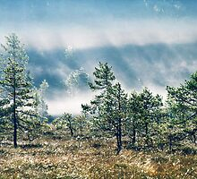 5.9.2013: Early Summer Morning Magic by Petri Volanen