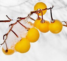 Frosty Yellow Berries  by Kathilee
