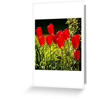 tulip impressions (square) Greeting Card
