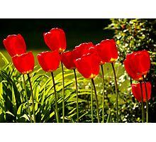 tulip impressions Photographic Print