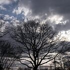 tree and sky I by Gabriele M - emmarts