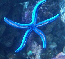 Starfish  by CloudedConcept