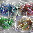 Frosted Maple Leaves in Pop Art Colours by JMcCombie