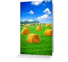 Golden hay bales in green field Greeting Card