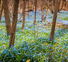 Carpet of blue flowers in spring forest by Elena Elisseeva