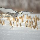 Gliding Snow by Scott Denny