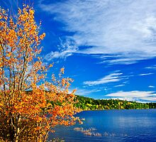 Fall forest and lake by Elena Elisseeva