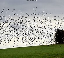 Fall Migration by Organic-Pics