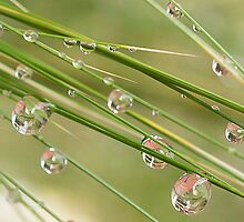 Water Drops on Grass by Mariola Szeliga