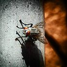 ©NS Resting Fly IAB Paintography by OmarHernandez