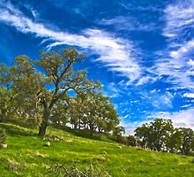Spring is Coming to the Hills by Barbara  Brown