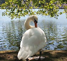 Schloss Benrath - Swan by the Pond by stine1