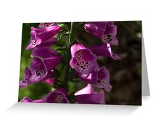 The Splendor of Foxgloves Greeting Card