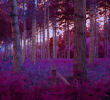 Dream Woods by Dist0rt