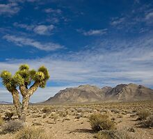 Joshua Tree by Sue  Cullumber