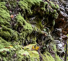 A Mossy Outcropping by circa24