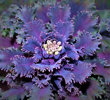 Leafy purple by ♥⊱ B. Randi Bailey