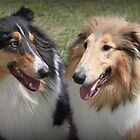 Lassie Love! by Staffaholic