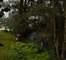 Kangaroo Valley - Peacefull Creek View 03 by Timothy Kenyon