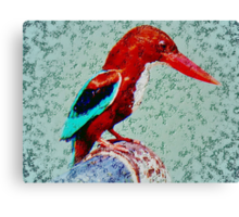 The White Breasted Kingfisher Canvas Print