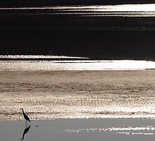 Waterbird on Lake Conjola by candysfamily