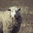 Sheep by Jasper Smits