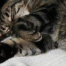 Sleeping Cat by Forfarlass