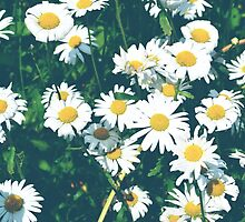 Light Blue Daisy Two by Jessica Reilly