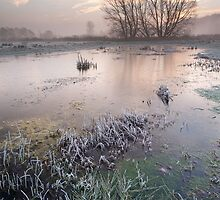 Cold Meadow Morning #3 by Christopher Cullen