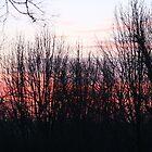 WINTER SUNRISE by Brenda Planchon