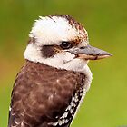 Laughing Kookaburra by Ann  Van Breemen