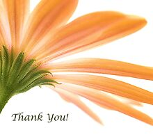 Osteospermum - Thank You! by Karosh