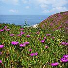Springtime in Half Moon Bay by Ellen Cotton