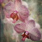 Orchids by vigor