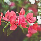 Bougainvillea by Th3rd World Order