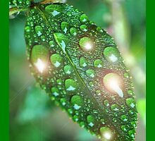 Tree Leaf With Water Drops / Rain Drops by mhykel