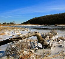 Drift Wood on the Frozen Nissequogue by LisaThomasPhoto