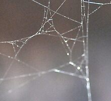 Spider Web by Bre Daly