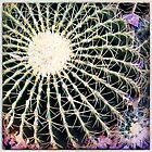 Barrel Cactus II by Roger Passman