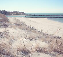 A Solitary Cape Cod Beach by Elizabeth Thomas