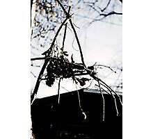 Devil Net Photographic Print