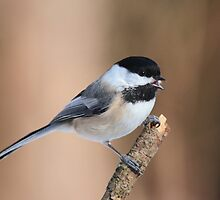 Call of the Chickadee by dwornham