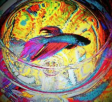 Betta Art The Collection  by Rita  H. Ireland