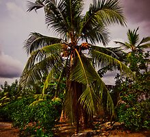Coconut tree on the beach by Anna Alferova